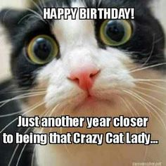 Cat Happy Birthday Meme Funnies Wishes Best