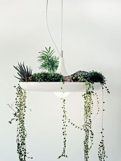 Plantable Light Fixture