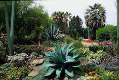 photo by Erika Shank Succulents Garden, Garden Plants, Water Garden, California Native Garden, Southern California, Pinterest Garden, How To Attract Hummingbirds, Drought Tolerant Plants, Native Gardens