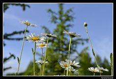 #photos #nature