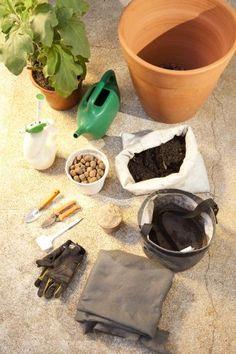 Horta orgânica: plante seu pé de berinjela sem agrotóxicos - Casa e Decoração - UOL Mulher