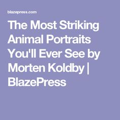 The Most Striking Animal Portraits Youll Ever See By Morten - The most striking animal portraits youll ever see by morten koldby