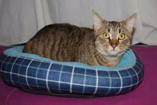 Cat of the Week  Sandy is a female domestic short-hair who is about 6 months old. She loves to curl up in your lap and be petted.