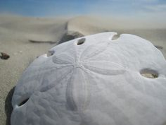 Sand dollars = best currency