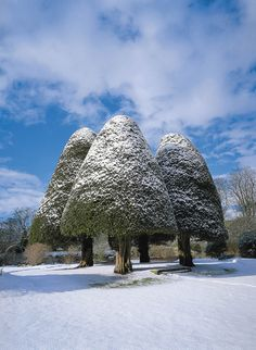 Heritage trees of Scotland | Forestry Commission Scotland - Heritage Trees of Scotland - The Four ...