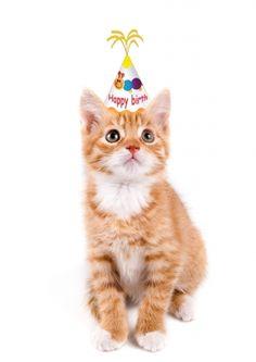 Wenskaart verjaardag kitten, poesje met feestmuts