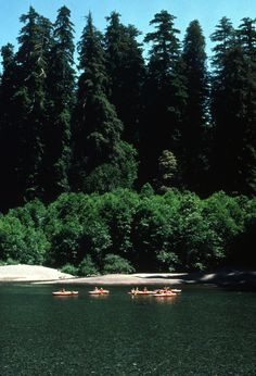 Jedediah Smith Redwoods State Park- great swimming hole