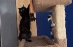 How to Introduce 2 Cats … Watch Until the End! (VIDEO)