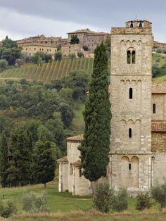 Vineyards, St. Antimo Abbey, Montalcino, Tuscany, Italy.