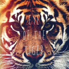 Eye of the tiger. This would be a cool tattoo on my shoulder, like if it were to peek out subtly from a t-shirt.