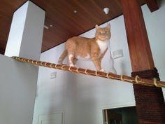 kissalle lauta, jota pitkin pääsee takan päälle