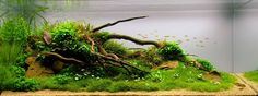 Aquascape by Aquasabi