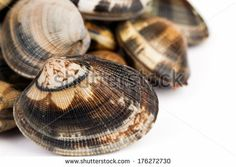 Seafood - Closeup of raw clams on white background. - stock photo