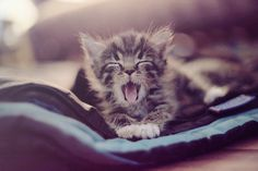 me this morning!  i didn't want to wake up!