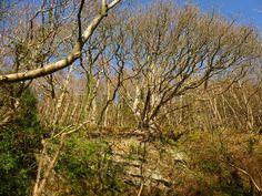 aberaeron woods