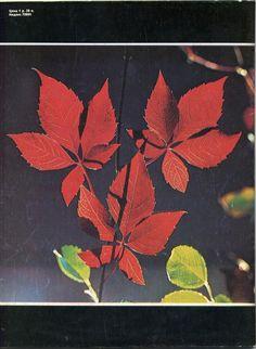 Советское фото, вып. 11, 1991 г.