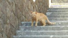 Cat in Kotor, Montenegro  #gabrielaaufreisen #catlover #catsofinstagram #catstagram #kotor #montenegro