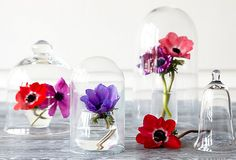 With several cloches and drinking glasses, you can turn a few flowers into a stunning yet simple tabletop display.