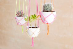 Display your succulent collection in these colorful planters.