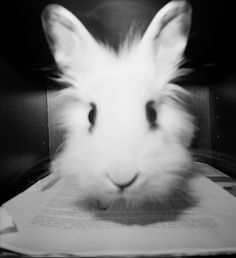 Bunny named Honey by at_the_zoo taken with Diana F+ - Lomography