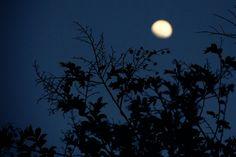 #silhouetteart #nettesdailyinspiration #silhouette #moon #tree #twilight #simplelove #quiet