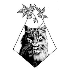 Esoteric Cat