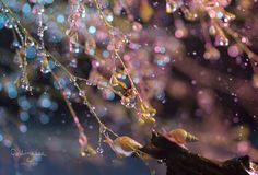 Petal rain