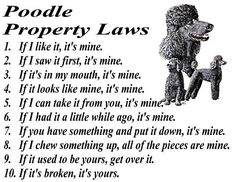 PARCHMENT PRINT = BLACK POODLE STANDARD & TOY DOG LAWS | eBay