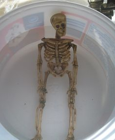 dollar store skeleton soaking in very hot water--you can bend his arms and legs into poses, then dip into ice water to keep the pose