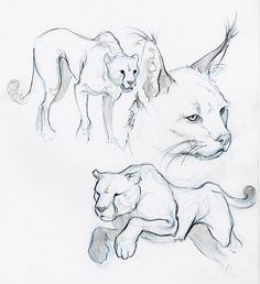 animal sketches - Google Search WHY CAN I NOT DO THIS IT LOOKS SO EASY BUT ARRRRRGHHHHHHHH