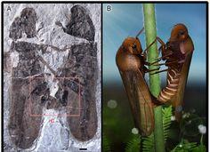 Insetti fossilizzati mentre facevano sesso