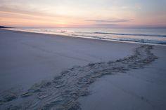 Sea Turtle Nesting #seaisland #seaturtles #nature www.seaisland.com