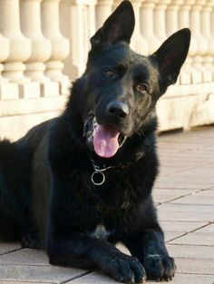 Black has always been my favorite color. and a good choice fab doggie love u www.capemaydogs.com