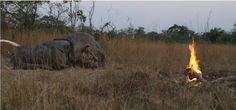 Un elefante aplasta a Theunis Botha tras pegarle un tiro en Zimbabue