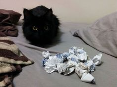 Cats Who Collect Things - Neatorama