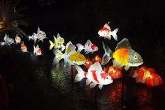 Lotus lantern festival.
