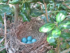 A robin and her eggs: Day 4 | Yikes Money