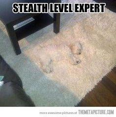 Stealth Level Expert!