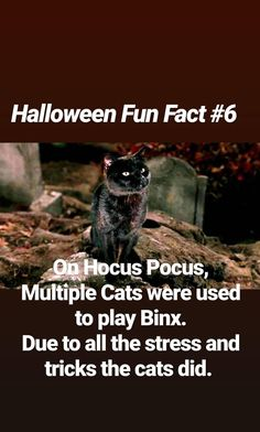 Halloween Halloween House, Halloween Night, Black Cat Adoption, Halloween Fun Facts, Celtic Festival, A Child Is Born, Walt Disney Pictures, Heaven And Hell, Dark Lord
