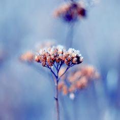 autumn leavs11 by agatafotografia