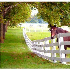 Rooksford Kentucky--Small Town, Big Dreams