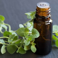 Oregano Oil Benefits Superior to Prescription Antibiotics? by @draxe