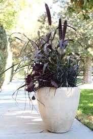 black mondo grass (good for shade)