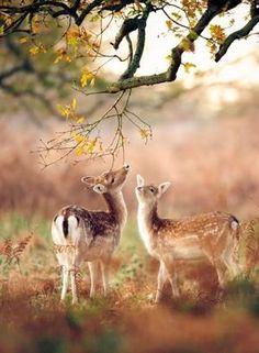 Wild nature forest animals 34 ideas for 2019 Autumn Animals, Forest Animals, Nature Animals, Animals And Pets, Funny Animals, Cute Animals, Wild Animals, Baby Animals, Autumn Nature