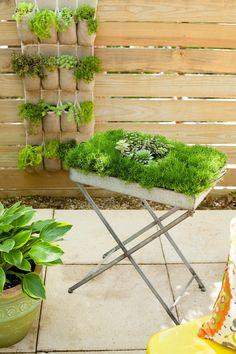 Ideal Moosbild und vertikaler Garten pflegeleichte G rten die man selbst gestalten kann