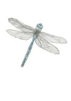 dragonfly drawing - Pesquisa Google