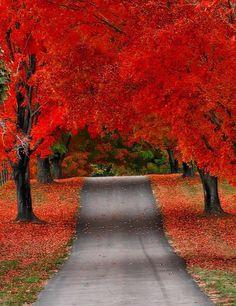 Que bela viagem é possível fazer nesta estrada, assim, toda colorida de vermelho, durante o outono.
