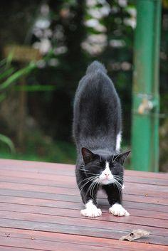 Downward Cat?