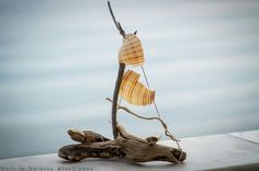 FantaSea - Made by Natassa Klavdianou Driftwood Art, Home Decor, Decoration Home, Room Decor, Home Interior Design, Home Decoration, Interior Design