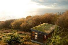 tiny house toit vegetal - Recherche Google